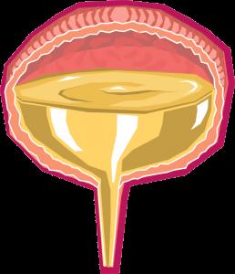 De urineblaas